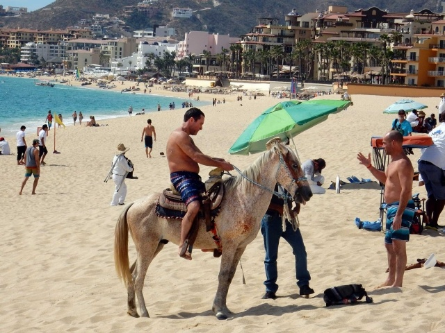 Cabo horse