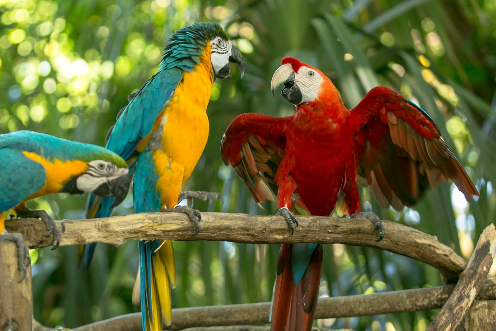 Macaws chatting in Cartagena