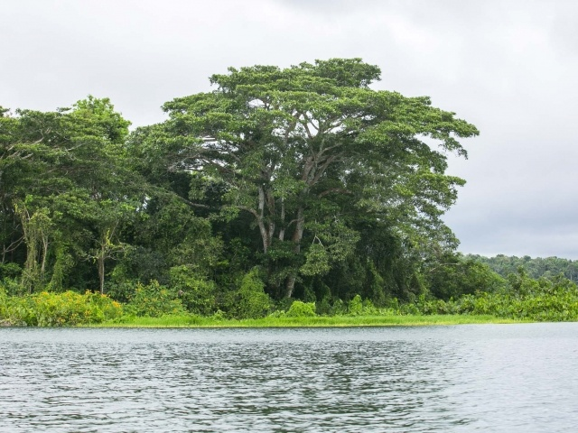 Gamboa rainforest in Panama