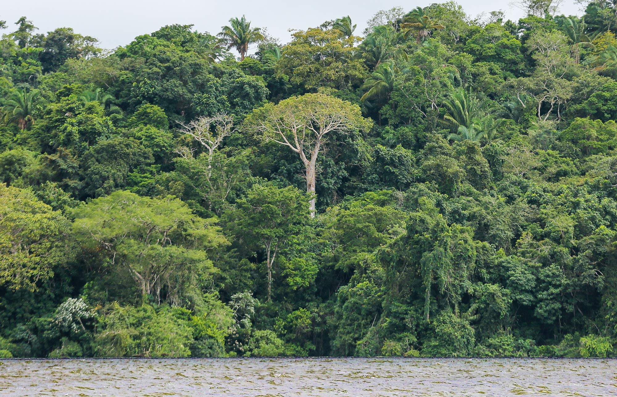 Gamboa rainforest on Gatun Lake in Panama
