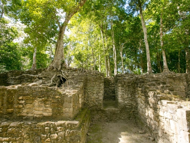 Trees and Mayan ruins at Dzibanche in Mexico